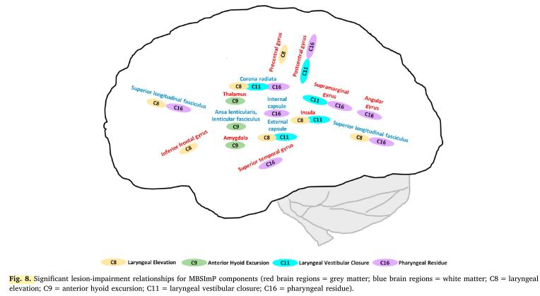 neuro swallow figure 8